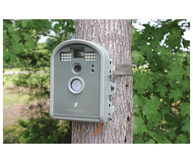 wingscapes birdcam pro motion activated digital wildlife cameras
