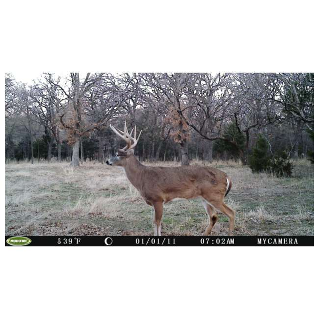 DGS-M80XD + 2 x MCA-12605 + 2 x SD2GB MOULTRIE M80XD Mini Infrared Digital Trail Cameras (2) + Security Boxes (2) + 2GB SD Cards (2)  7