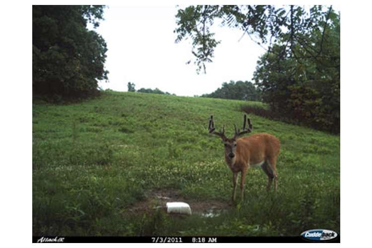 ATTACK-1149 + CUDDESAFE-ATTACK-3112�Cuddeback Attack 1149 5 MP Day & Night Photo Trail Game Camera + CuddeSafe Security Box